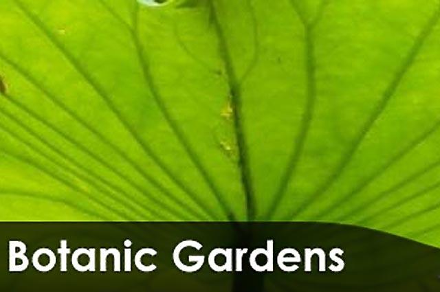 ipic360.com listing search / Adelaide Botanic Gardens
